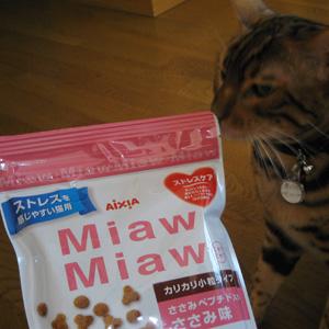 ベンガル猫ゆきむら / 猫のダイエット