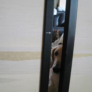 ベンガル猫ゆきむら / 待て