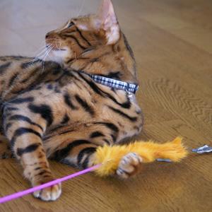 ベンガル猫ゆきむら / お気に入り