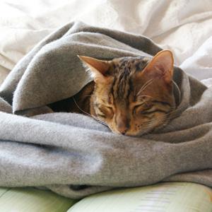 わんこ猫ゆきむらぶろぐ / 寝正月