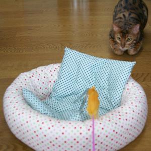 わんこ猫ゆきむらぶろぐ / 猫じゃらし