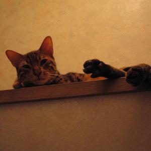 ベンガル猫ゆきむら / 昼寝