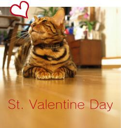 ベンガル猫ゆきむら / バレンタイン