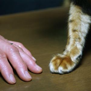 わんこ猫ゆきむらぶろぐ / お手伝い