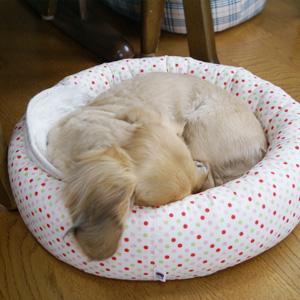 わんこ猫ゆきむらぶろぐ / ぬこベットの収まり方