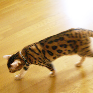 わんこ猫ゆきむらぶろぐ / 猫背