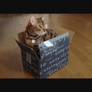 わんこ猫ゆきむらぶろぐ / 壁紙