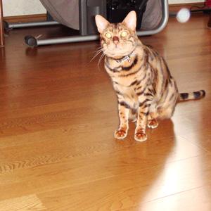 わんこ猫ゆきむらぶろぐ / フラッシュなヤーツ