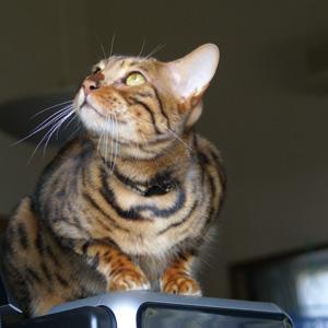 わんこ猫ゆきむらぶろぐ / ツバメさん印