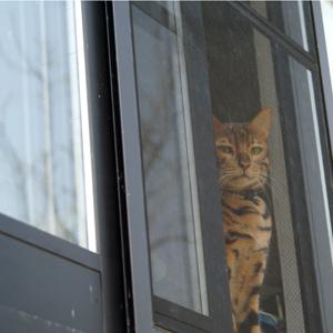 わんこ猫ゆきむらぶろぐ / 見てるよ