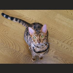 わんこ猫ゆきむらぶろぐ / 【壁紙】 パソコン用ゆきむ壁紙配布。