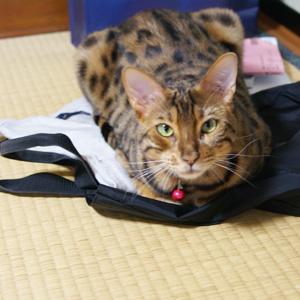 わんこ猫ゆきむらぶろぐ / 萌えの最上級