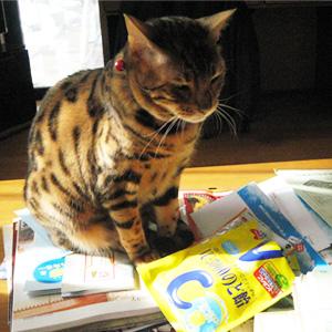 わんこ猫ゆきむらブログ/花粉症