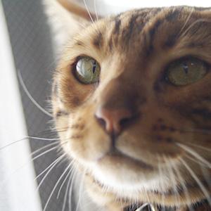 わんこ猫ゆきむらブログ_一点集中