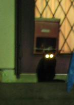 黒猫ちゃん01