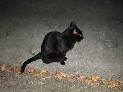 黒猫ちゃん02