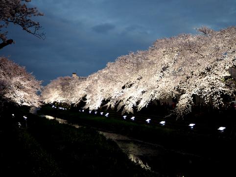 野川ライトアップ30*