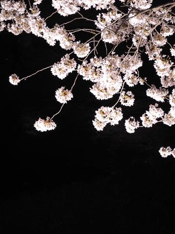 野川ライトアップ70*