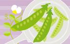 野菜ソムリエ挿絵5.0