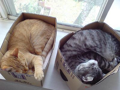 我が家の猫鍋 〜 えむとちゃむ