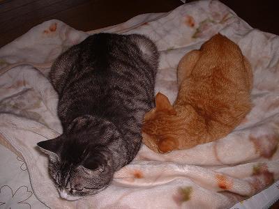 今日のえむ&ちゃむ 〜 毛布の上に並んで・・・