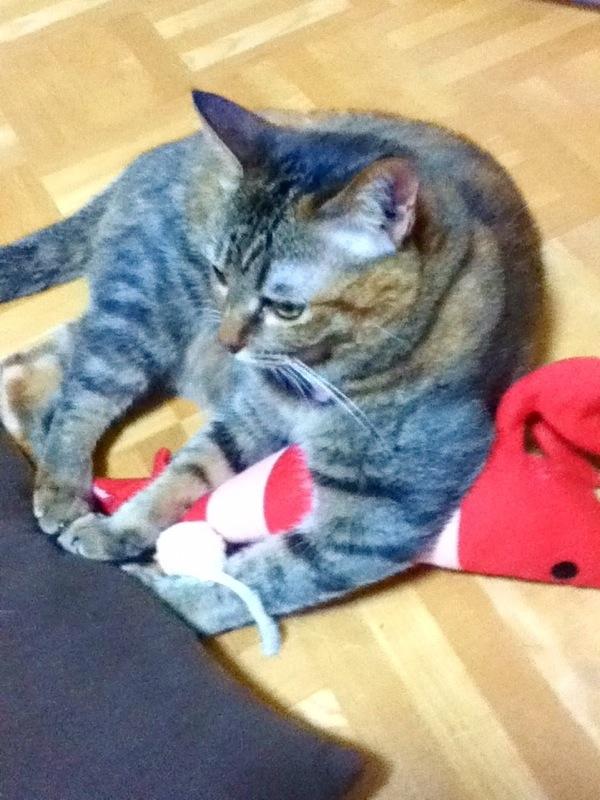 ねこ生活 猫砂、キャットフード、キャットタワー,猫ちゃん,けりぐるみ