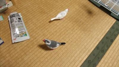 文鳥ちゃん