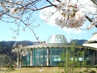 桜とバーデ