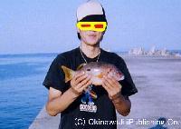DICE−Kの釣果