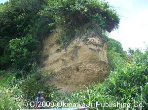 運天の貝化石層
