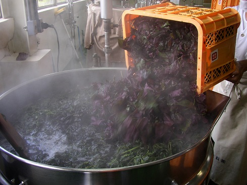 釜へ赤しそを入れて煮ます