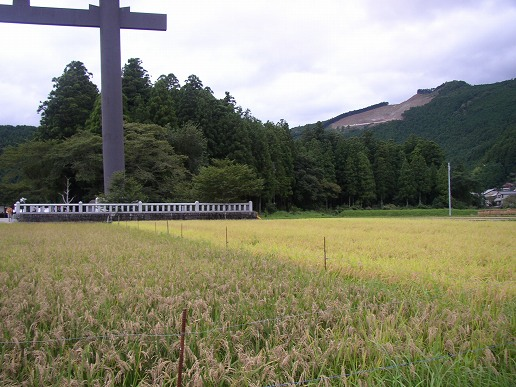 大斎原前。古代米ともち米