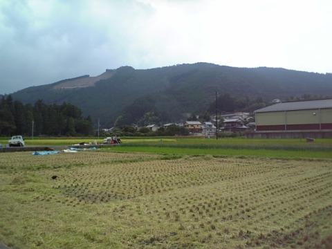 大斎原前の稲刈り