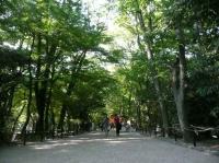 糺すの森2