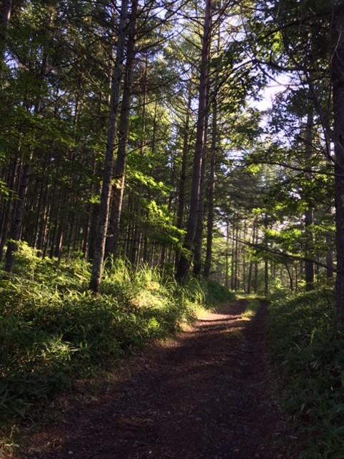千代田そう前の雑木林