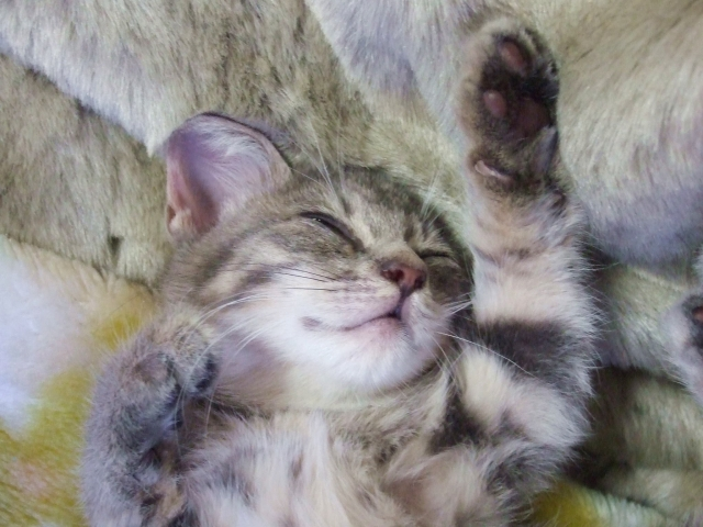 良質な睡眠はダイエットにつながる
