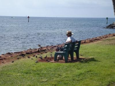 おじいさんと鳩と海
