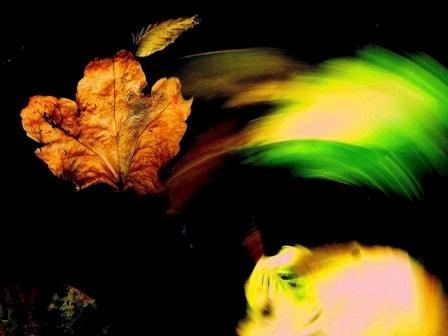 沈んだ葉と回る木の葉
