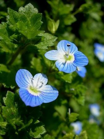 とても可愛い小さな花です