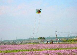 蓮華畑の大凧