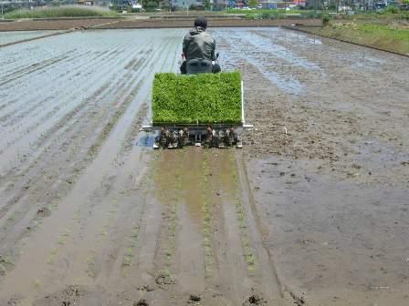 機械化進んだ田植え