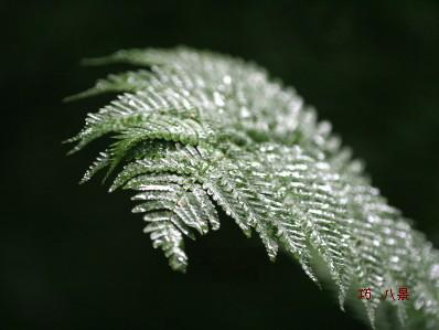 雨に濡れシダの反射光