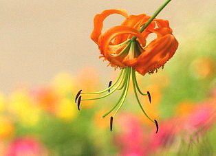 花言葉は飾らぬ美