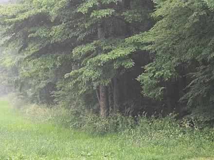 雨に煙る森の風景