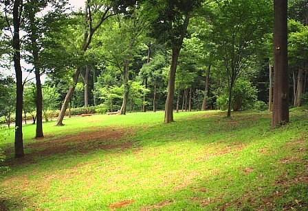 森の丘で一休みのお誘い