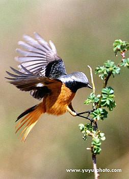 羽音が聞える羽ばたき