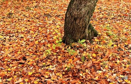 黄落の木の葉も美しい