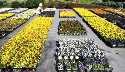入り口の花並び