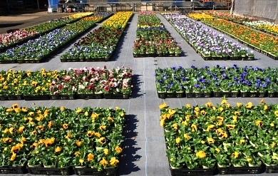 奥庭の鉢花