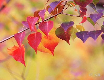 自分の好きな紅葉を撮る